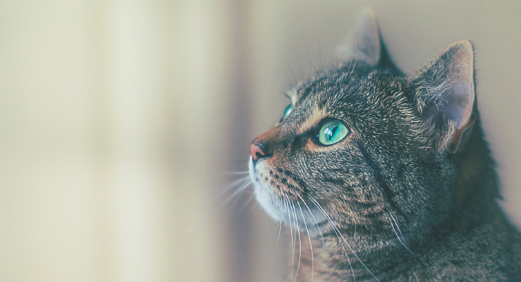 5 Cat Supplies That'll Save Your Furniture (and Your Sanity)