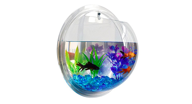 6 Better-Than-Basic Home Aquariums