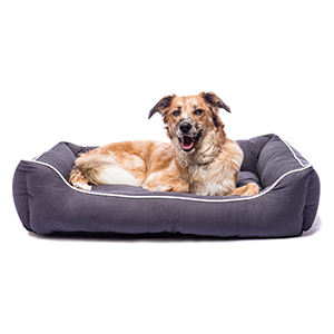 Dog lying in dog bed photo