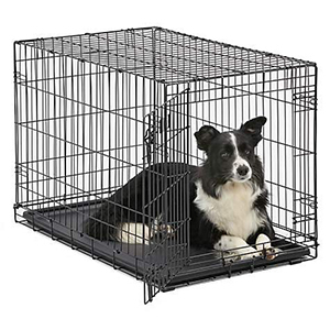 Dog in wire pet crate photo