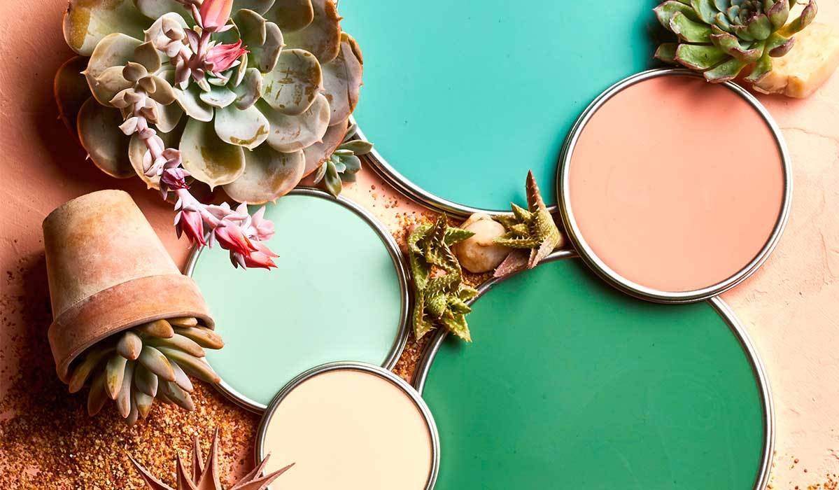 Teal, green, and coral paint lids surrounded by succulents photo