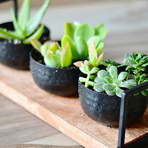 Three succulent plants in black planters. photo