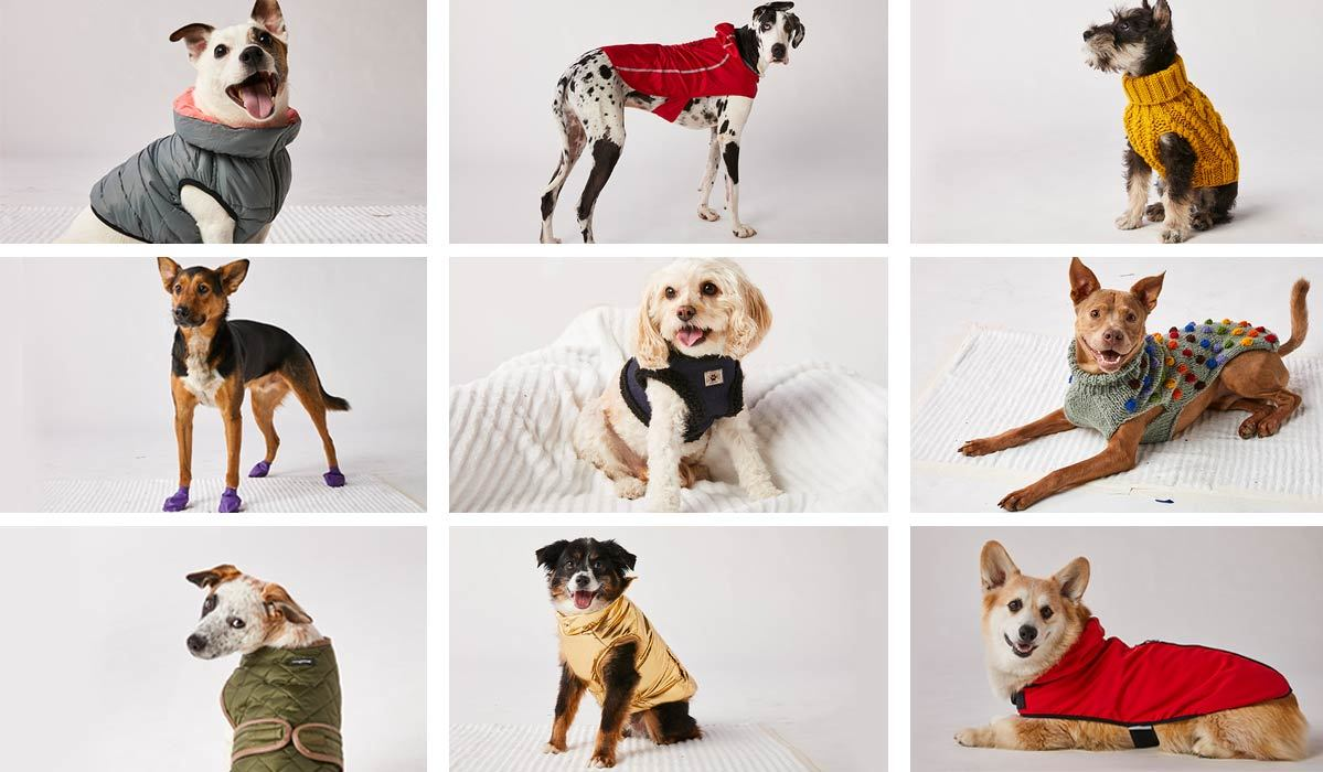 A collage of dogs wearing various outfits photo