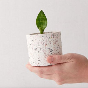 Small planter with a speckled print from Urban Outfitters photo