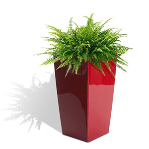 red planter with a fern in it photo