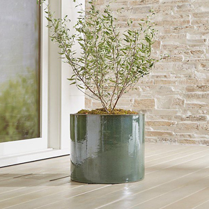 green planter on a porch with a small tree photo