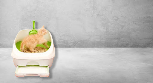 The One Litter Box System to Eliminate Odor and Tracking Once and for All