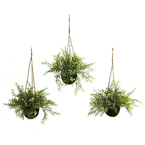 Three hanging basket plants from The Home Depot photo