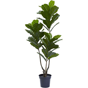 Fiddle leaf tree from The Home Depot photo