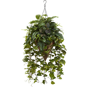 Vines of greens in a cone hanging basket from The Home Depot photo