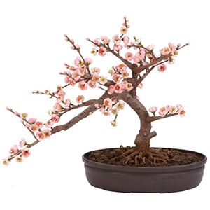 Pink cherry blossom bonsai tree with pot from The Home Depot photo