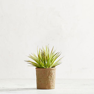 Small spikey succulent in a brown pot photo