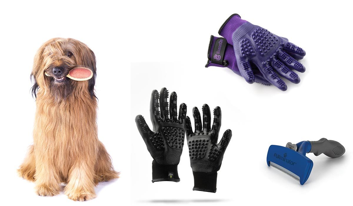 Dog with a brush in its mouth, grooming gloves, and deshedding tools photo