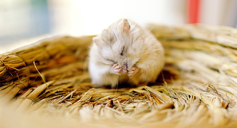 Everything You Need to Make Your New Hamster Feel at Home