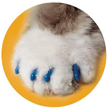 A set of blue claw caps for cats photo