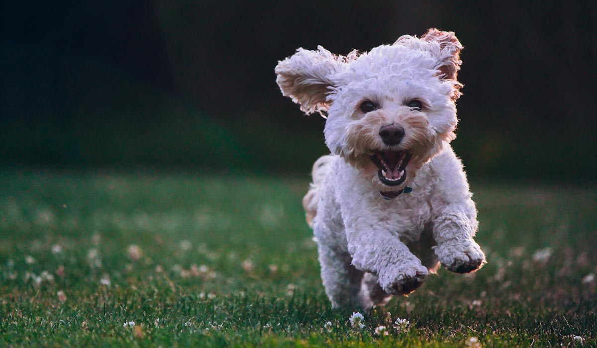 Treat Your Fur Baby to These Amazing(ly Cute) Dog Toys