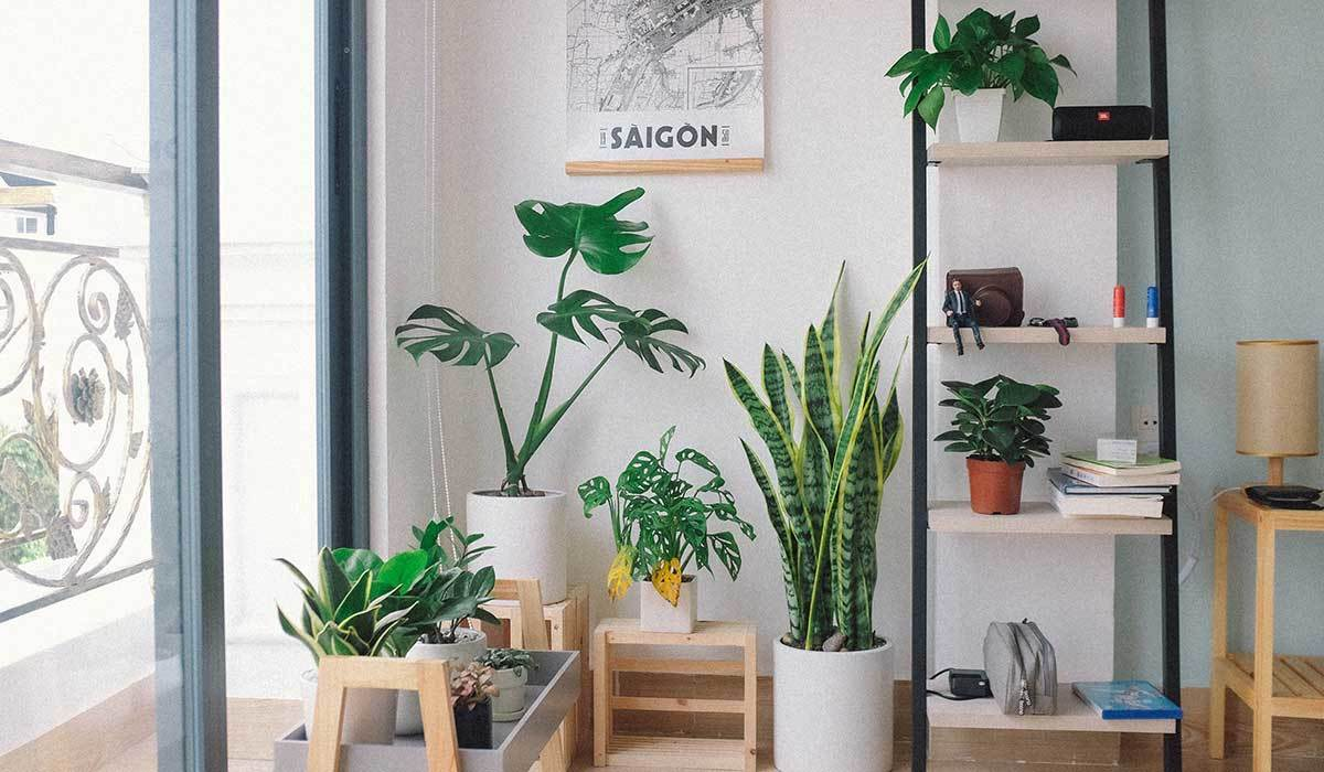 Becoming a Plant Parent Has Never Been Easier Thanks to These Three Houseplants