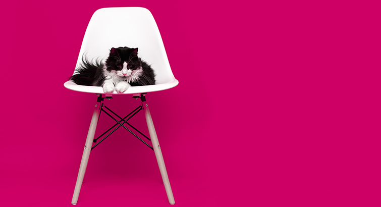 Are You Really a Crazy Cat Lady If You Don't Own These 5 Feline-Inspired Items?
