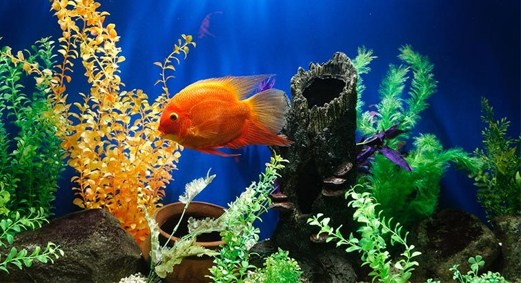 6 Fun Aquarium Accessories to Deck Out Your Fish Tank