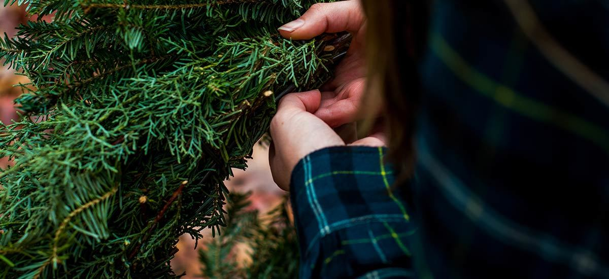 A person in a green and blue flannel handling ferns
