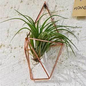 NCYP Hanging Air Plant Rustic Wall Mount from Amazon photo