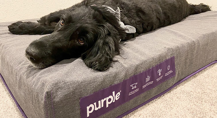 How Purple's Pet Bed Held Up Against My Two 50-Pound Dogs