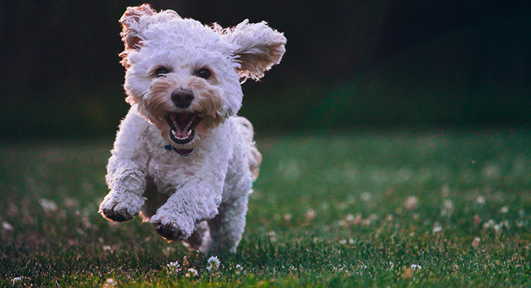 Here's How to Keep Your Dog Happy and Healthy This Year