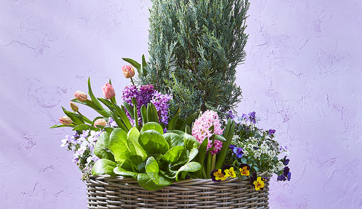 Basket of flowers in front of purple background photo