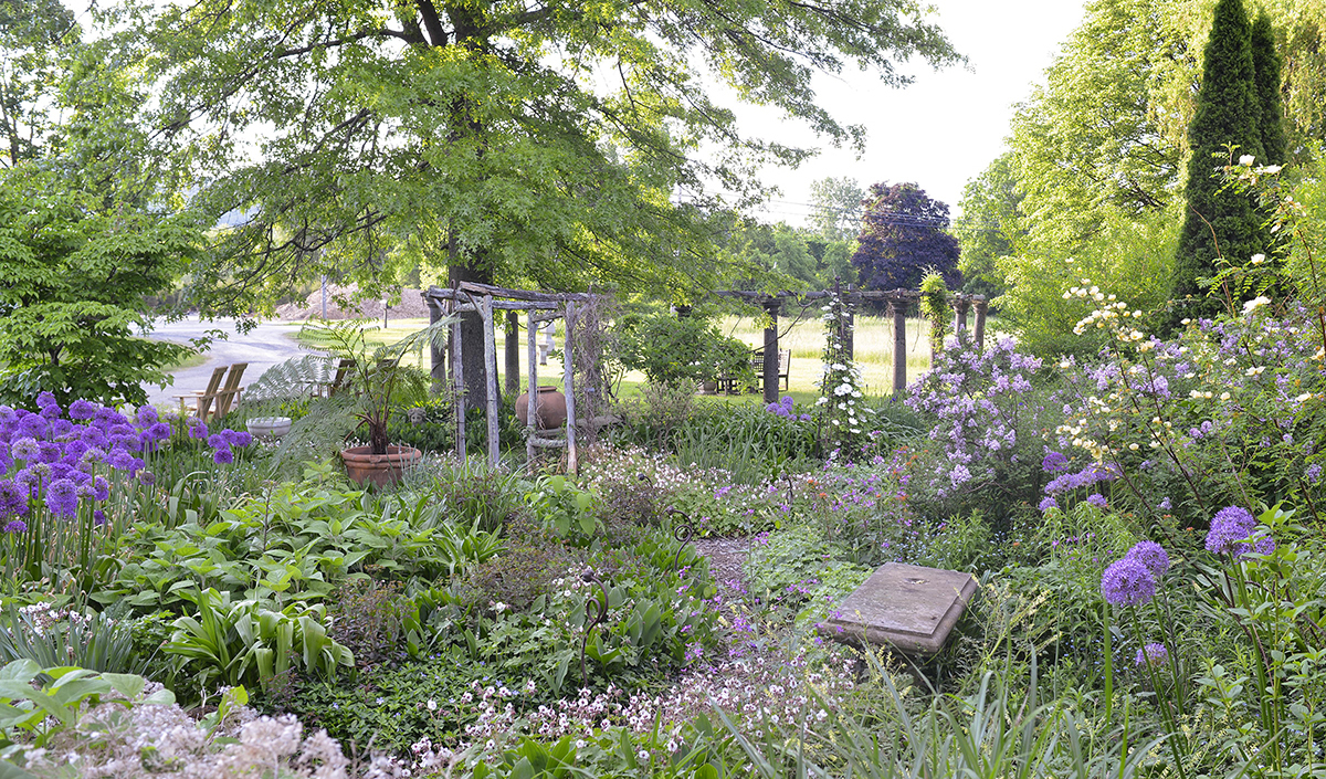 Outdoor garden full of green, white, and purple plants photo