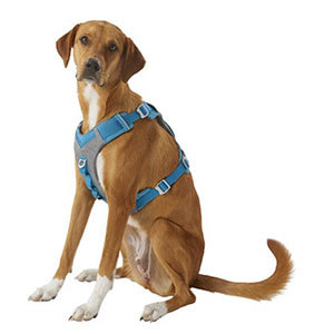 Kurgo Journey Air Dog Harness from Chewy photo