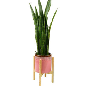 Pink planter with stand from Overstock photo