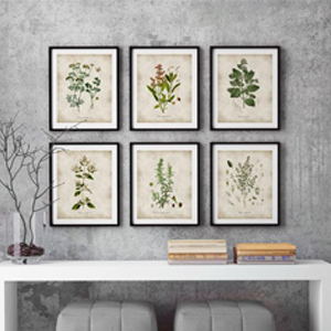 Herb illustrations from Etsy photo