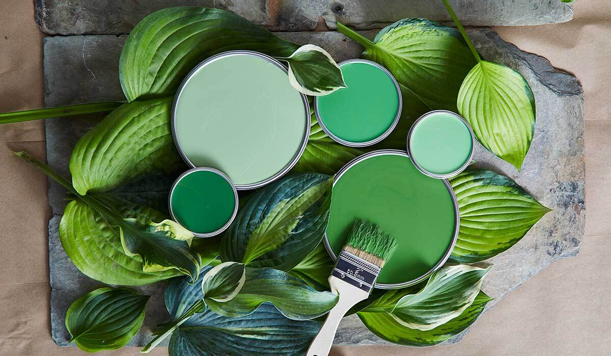 Green paint lids surrounded by hosta leaves photo