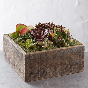 A Variety of Succulents in a Rustic Wooden Box From 1-800-Flowers photo