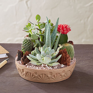 A Variety of Cacti and Succulents in a Stone Dish From 1-800-Flowers photo