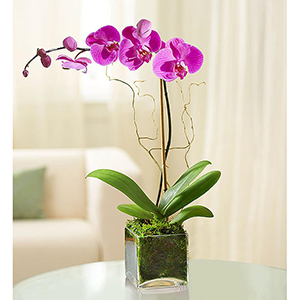 Purple Orchid Flower in a Glass Vase From 1-800-Flowers photo