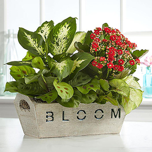 Various Plants in a Rustic Basket With the Words