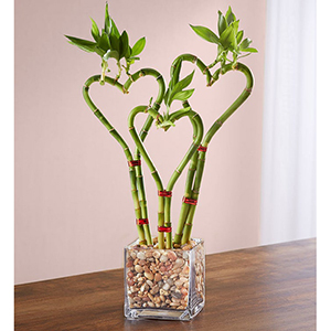 Three Stalks of Bamboo Shaped Like Hearts in a Glass Vase From 1-800-Flowers photo