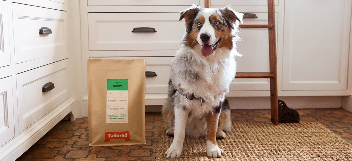 A dog sits in a kitchen next to a bag of Tailored Pet food