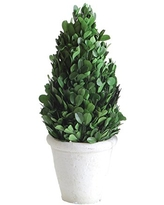 MUDPIE Cone Shaped Boxwood in Pot