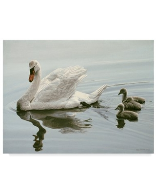 Trademark Fine Art 'Mute Swan And Three Cygnets' Canvas Art by Ron Parker