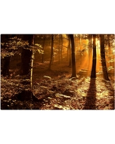 'Morning Light' by Philippe Sainte Laudy Ready to Hang Canvas Wall Art, Sunny