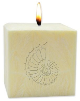 Carved Solutions Eco-Luxury Citrus Escape 4-Inch Palm Wax Spiral Shell Pillar Candle in Champagne