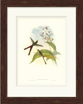 Darby Home Co 'Gould Hummingbird III' Framed Graphic Art DABY6154