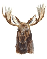 Woodland Moose Watercolor Nursery Wall Art Available In Various Sizes, Nursery Art, Brown - Various Sizes Available