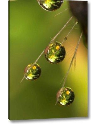 """Ebern Designs 'California San Diego Water Drops on a Dandelion' Photographic Print on Wrapped Canvas BI154989 Size: 32"""" H x 21"""" W x 1.5"""" D"""