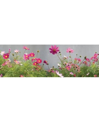 """East Urban Home Field of Cosmos Photographic Print on Wrapped Canvas ESHM9136 Size: 12"""" H x 36"""" W x 1.5"""" D"""