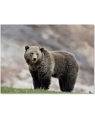"Trademark Fine Art 'Bear' Photographic Print on Wrapped Canvas, Canvas & Fabric, Size 14"" H x 19"" W 