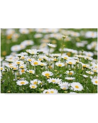 """Ebern Designs 'Field of Daisies' Photographic Print on Wrapped Canvas FOEF2770 Size: 16"""" H x 24"""" W x 2"""" D"""