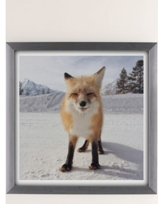 Michael O'Neal Red Fox Art Print - Silver 16X16 at Urban Outfitters